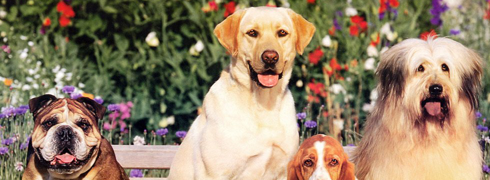 Esposizione Canina Sanremo